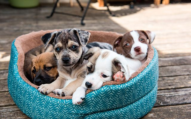 10 Best Cute Dog Beds – Your Dog Want to Nap All Days!