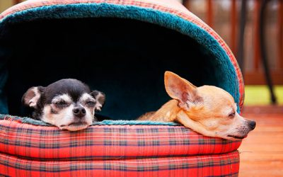 Best Dog Cave Beds in 2019 for Your Little Ones!