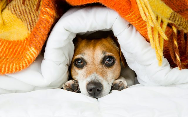 Best Heated Dog Beds in 2019 – You Never Worry about Keeping Warm for Them!