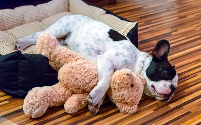 12 Best Memory Foam Dog Beds for Your Dog
