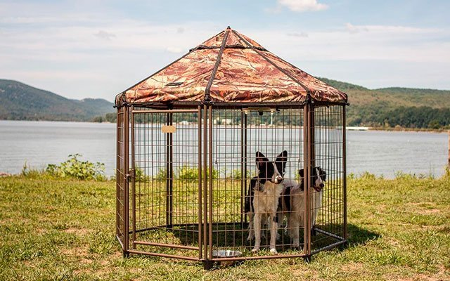 The Best Dog Kennels Your Pets Would Love in 2019