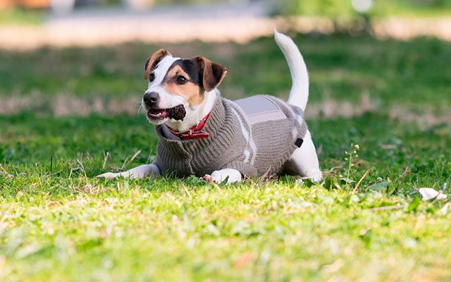 The Best Dog Sweaters Trending For Puppies