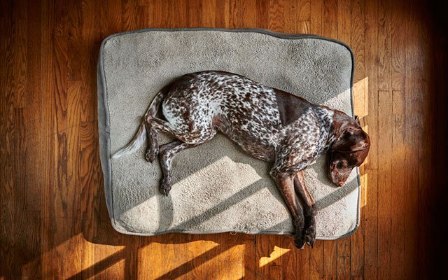 11 Best Washable Dog Beds [Updated 2019]
