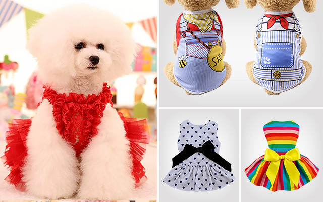 Best Dog Dresses for Your Dog before Participating an Event