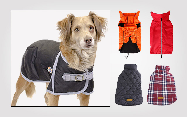 Best Dog Jackets and Coats in 2019 – You Should NOT Miss Out