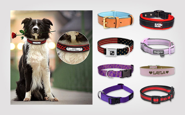 Best Large Dog Collars to Buy in The Black Friday Season!