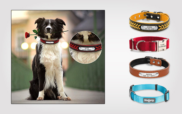 Coolest Personalized Dog Collars 2019