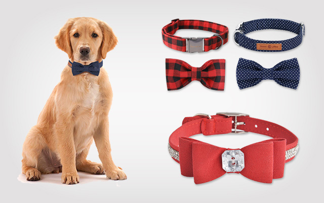 How Can I Select the Cute Dog Collars for My Pooch?