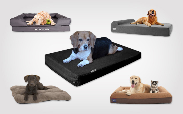 Best Waterproof Dog Beds with Lowest Maintenance for Busy Dog Parents