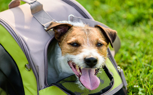 Best Small Dog Carriers in 2019