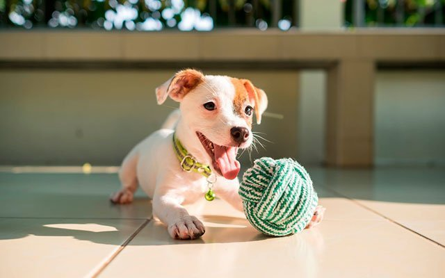 10 Best Indestructible Dog Toys – Your Dog Cannot Destroy As Easy As Pie!