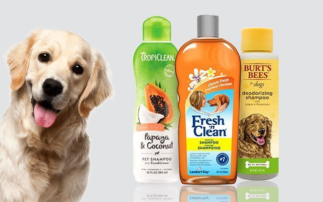 12 Top Best Smelling Dog Shampoos in 2019