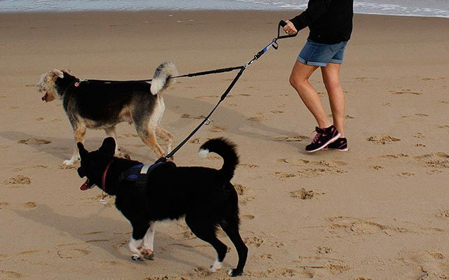Best Double Dog Leashes – Surely Good for Your Dogs