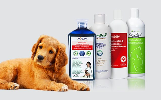 Top 12 Best Antifungal Dog Shampoos 2019