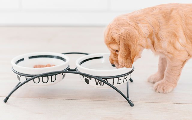 Best Ceramic Dog Bowls in 2019 to Choose From