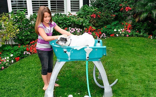 11 Best Dog Bath Tubs 2019