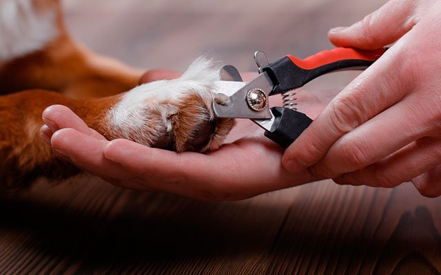 Best Dog Nail Clippers 2019