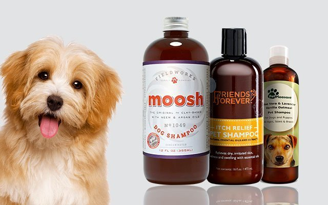 11 Best Dog Shampoos for Dry Skin in 2019