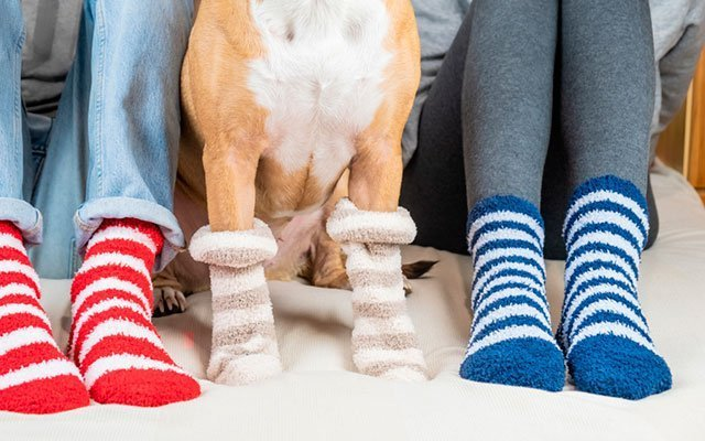 Best Dog Socks to Keep Your Canine Pal's Feet Warm