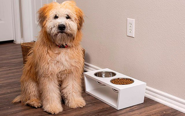 11 Best Elevated Dog Bowls in 2019 – For Any Pet You Can Choose