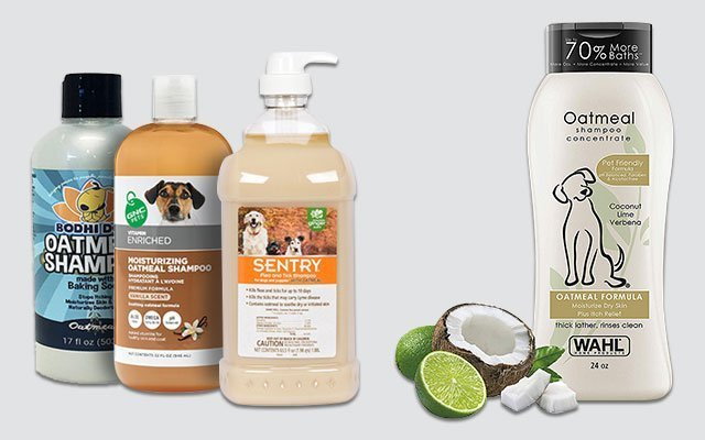 10 Best Oatmeal Shampoo for Dogs in 2019