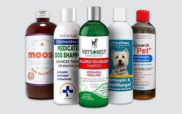 Best Dog Shampoo for Allergies in 2019 by Professional Vets