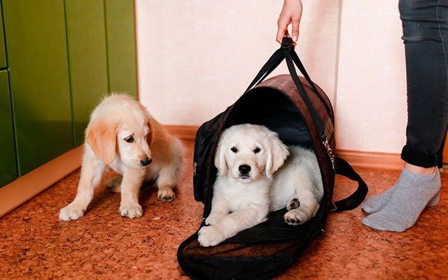 Best Dog Travel Bags in 2019 – A Reliable Companion during Every Journey
