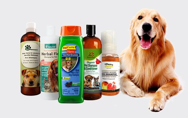 11 Best Flea Shampoo For Dogs in 2019 That Work Effectively