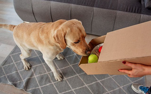 10 Coolest Dog Toy Boxes in 2019