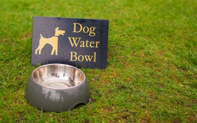 Best Dog Water Bowls in 2019 For Your Canine Buddy