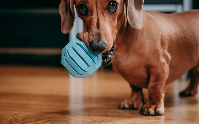 Best Puppy Toys in 2019 – The Most Worth-Considering Products You Should Consider!