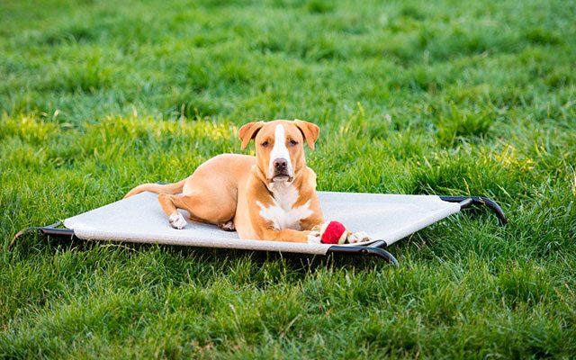 13 Best Cooling Dog Beds in 2019 – The Paradise for Your Canine Companion in the Summer