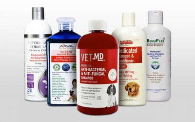 Best Medicated Dog Shampoos in 2019