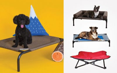 10 Best Raised Dog Beds in 2019
