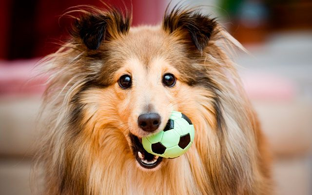 Top 10 Awesome Interactive Dog Toys in 2019