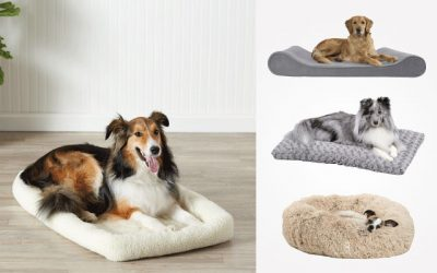9 Best Large Dog Beds in 2019